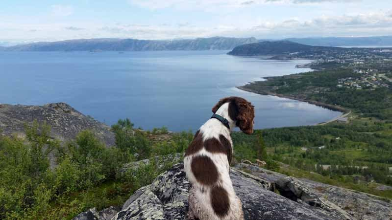 Anja the dog in Alta, Norway