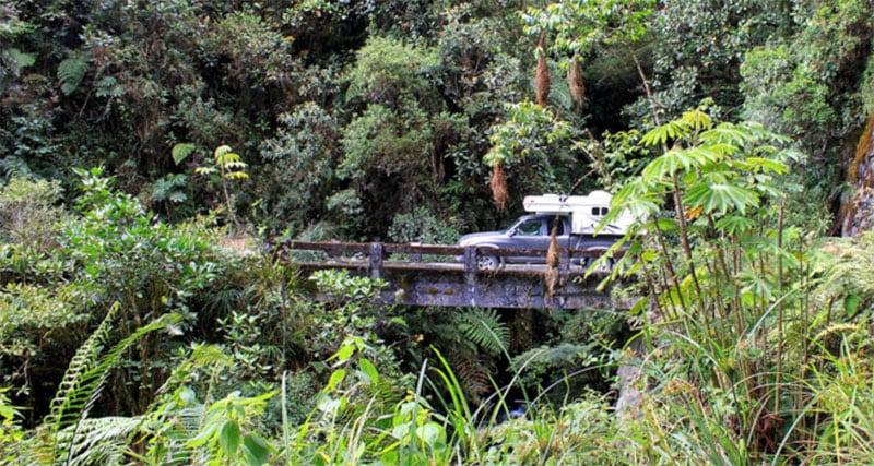Jungle Camping Palomino Bronco