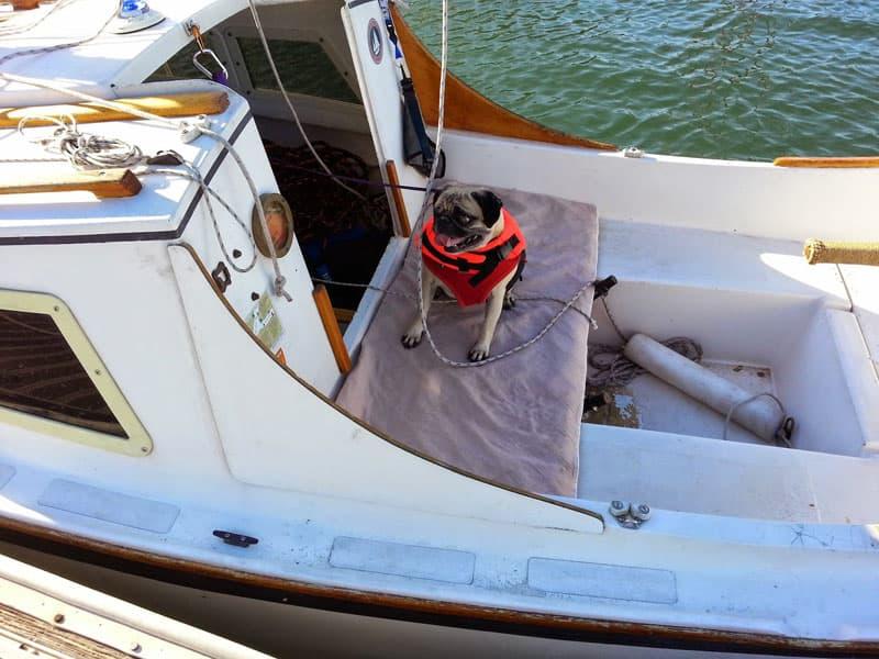 Tugboat Dog Winnie