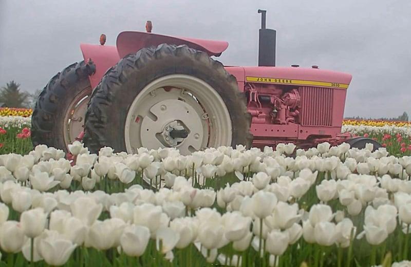 Tulip Festival in Oregon Tractor