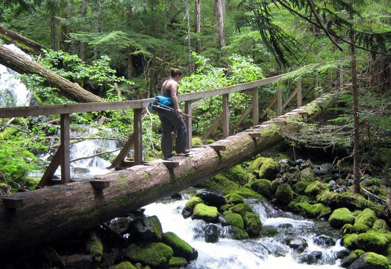 Rainforest Bridge Vancouver Island