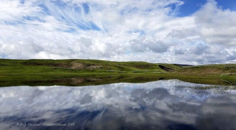 Reflection In Hayden Valley