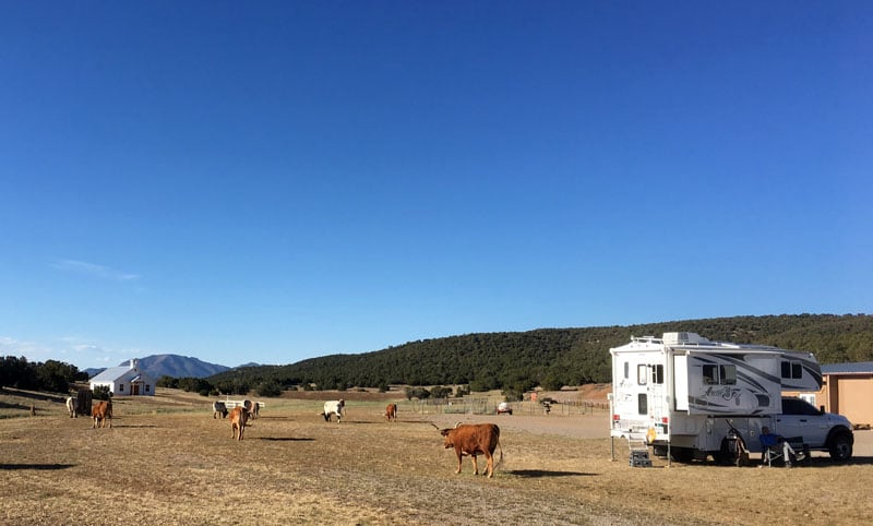Staying On A Ranch With A Herd Of Longhorns In Moriarity New Mexico