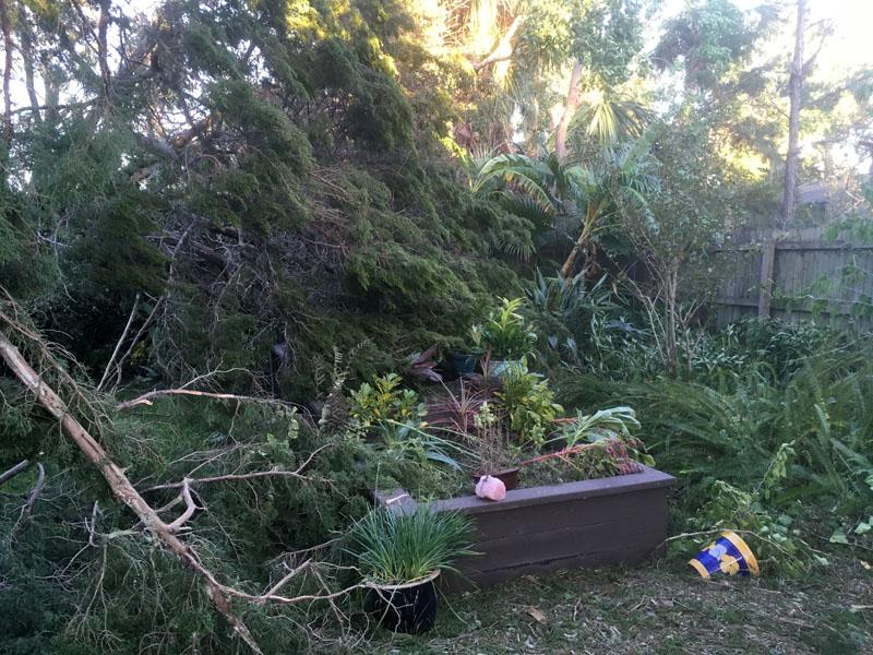Yard After Hurricane Matthew Hit