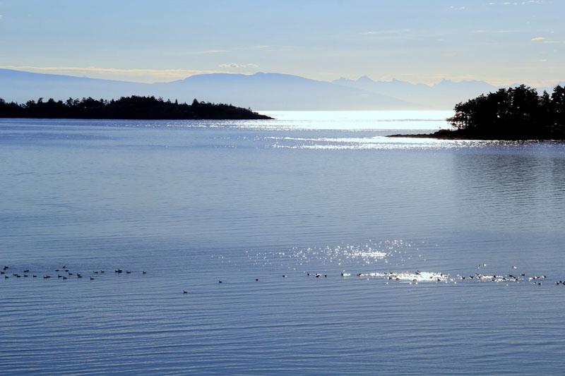 East Coast Of Vancouver Island