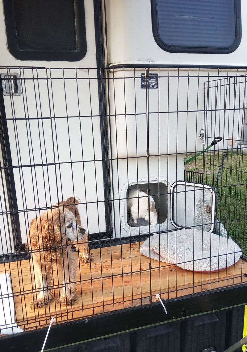 Dogs Using Deck On Back Of Camper