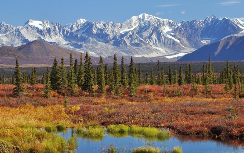 Along The Denali Highway Alaska