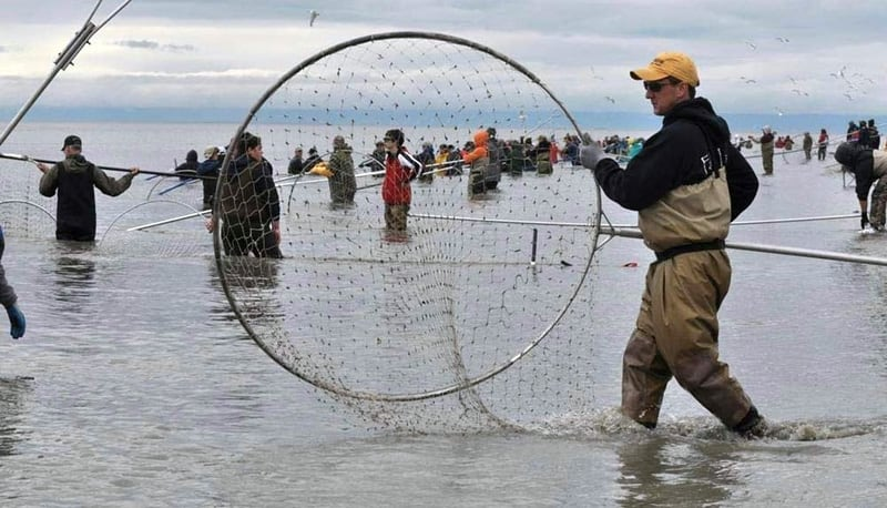 Dip Netting Sockeye Salmon Reds On The Kenai River