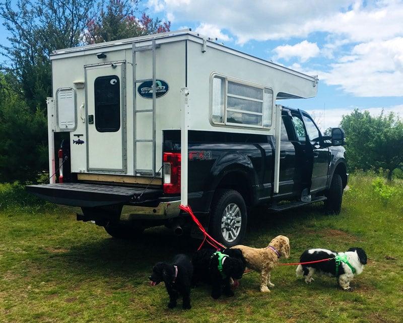 Phoenix Camper Five Dogs