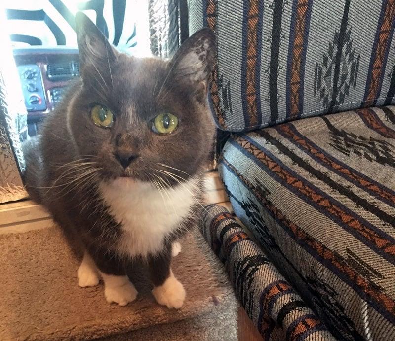 Cat In Popup Camper