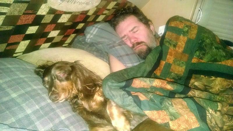 Dashchund Sleeping