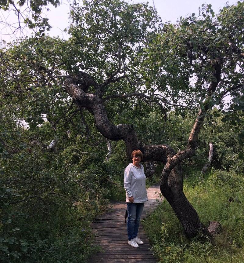 Alticane Crooked Trees Hafford