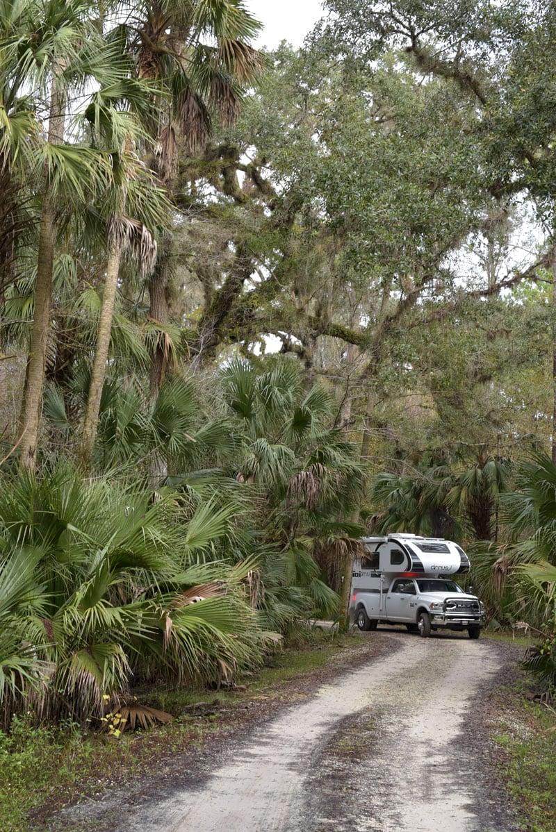 Jungle Driving In Florida