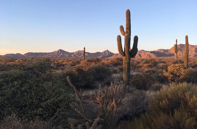 View at McDowell Mountain Park Arizona