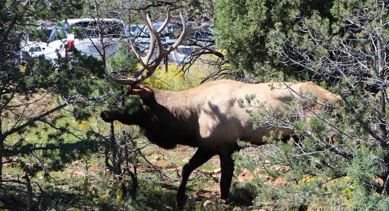 Elk South Rim Parking Lot NP