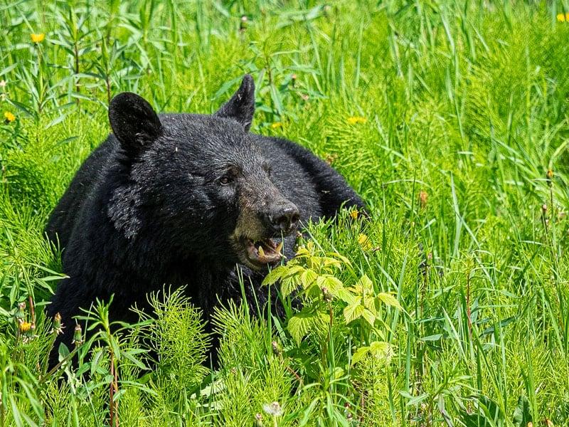 Bear Dempster Highway