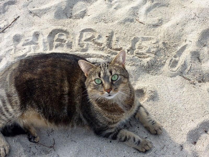 Harley's Name In Sand