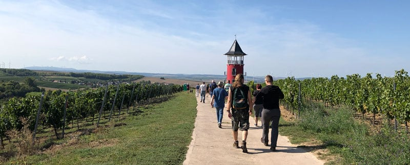 Hiking In The German Vinyards