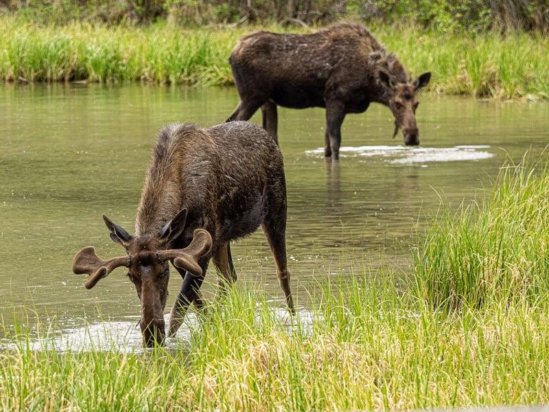 Moose Dempster Highway