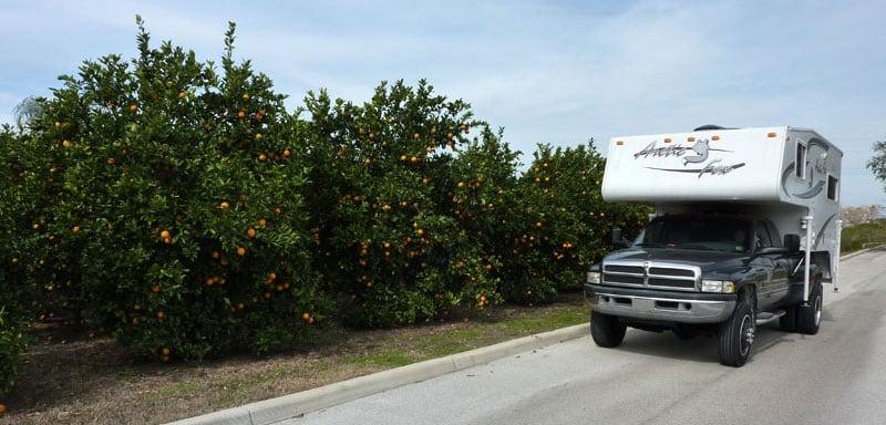Oranges In Florida