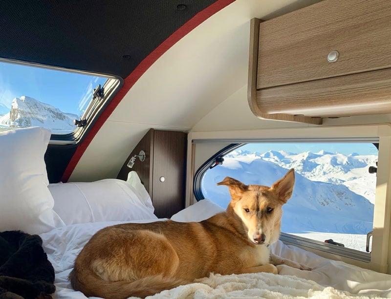 Toasty Warm Dog With Alde System