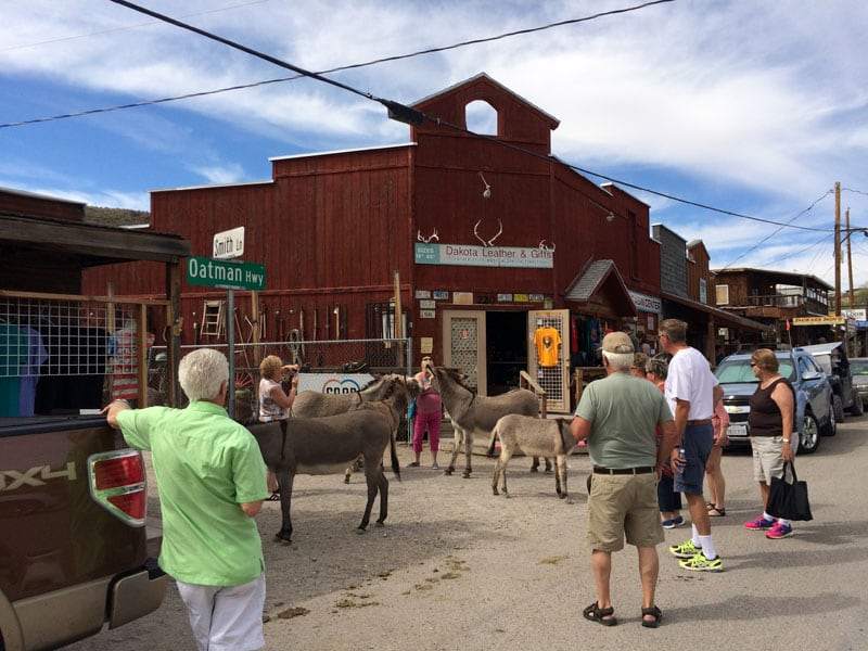 Burros In Full Feed Mode In Oatman