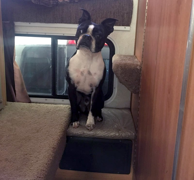 Passthrough Window In Campers For Dogs