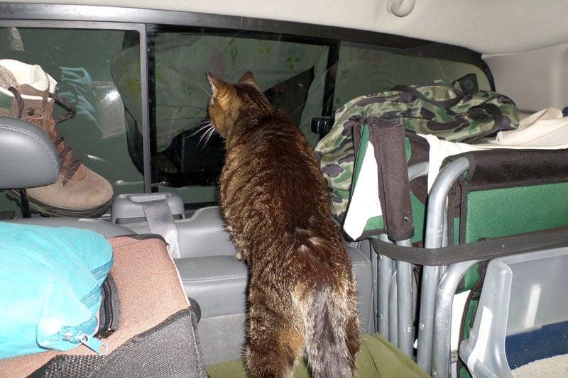 Pippi Shortstocking At Camper Window