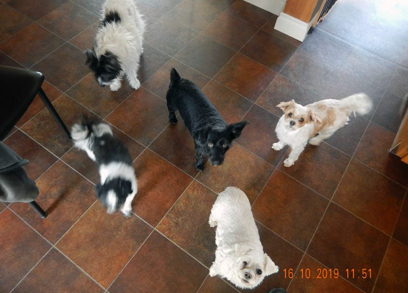 Lexi Twinkle Pipi Cadie And Mia Dogs