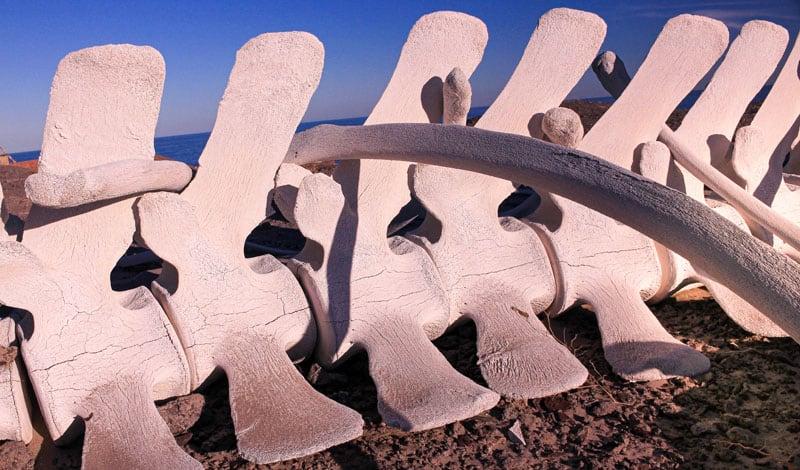 Whale bones near Puertecitos