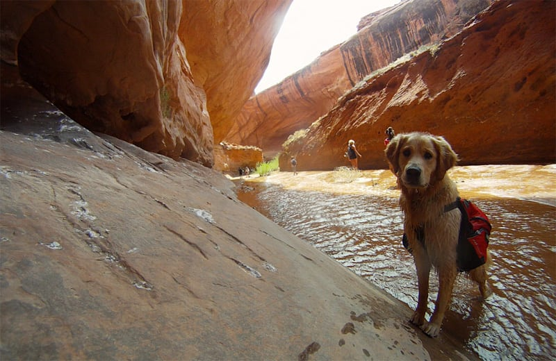 Booter Dog Hiking