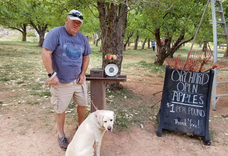 Apple Orchard At Capitol Reef