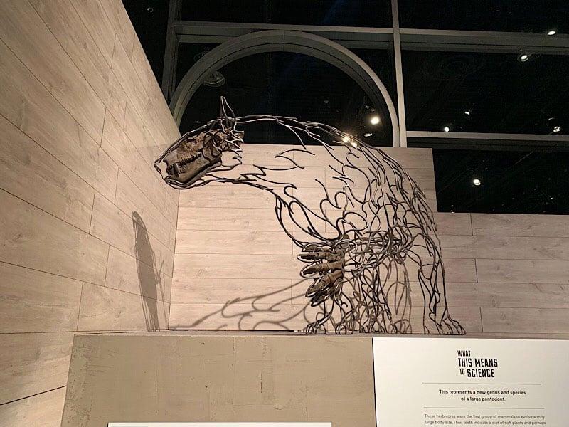 Museum Of Palaeontology Titanoides Sp Relative
