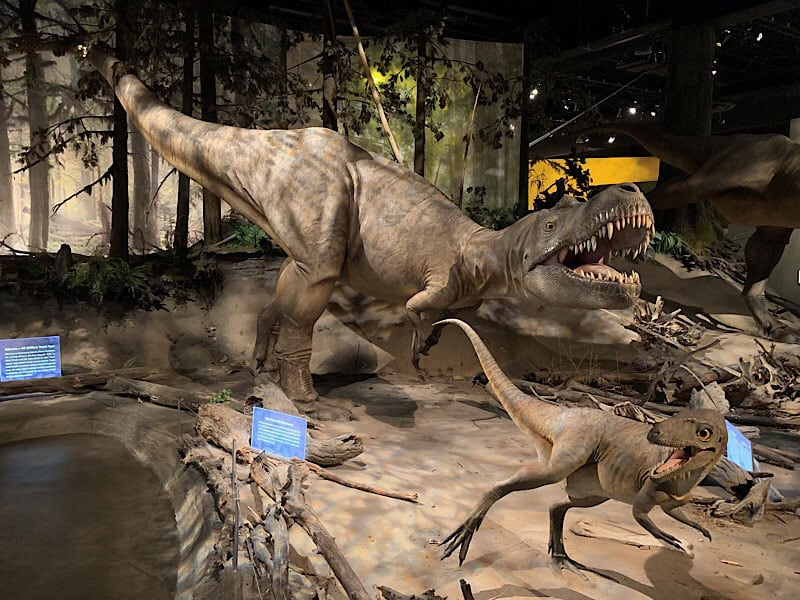 Royal Tyrrell Albertosaurus Female Adult And Juvenile