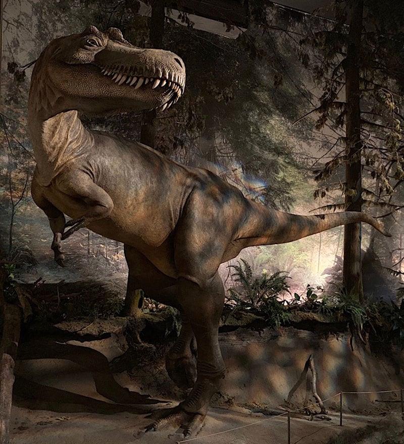 Royal Tyrrell Albertosaurus Teenager