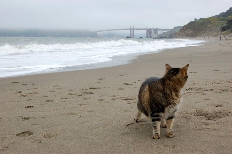 Harley Baker Beach San Francisco