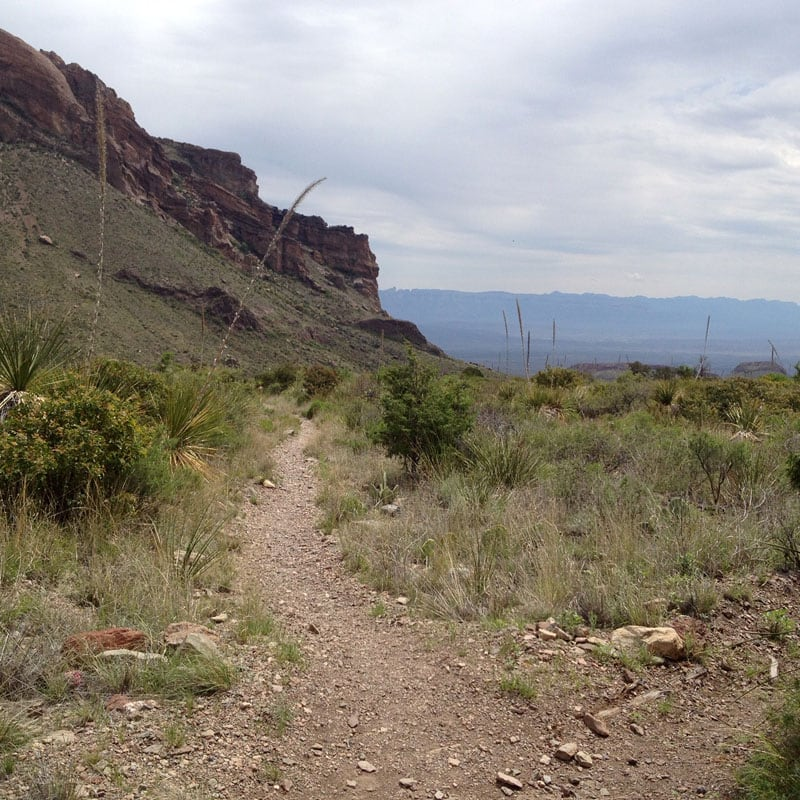 Pine Canyon Trail Looking Back Down The Trail