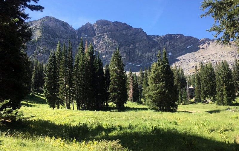 Annual National Forest trip to Albion Basin in Utah