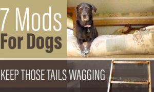7 Camper Mods For Dogs