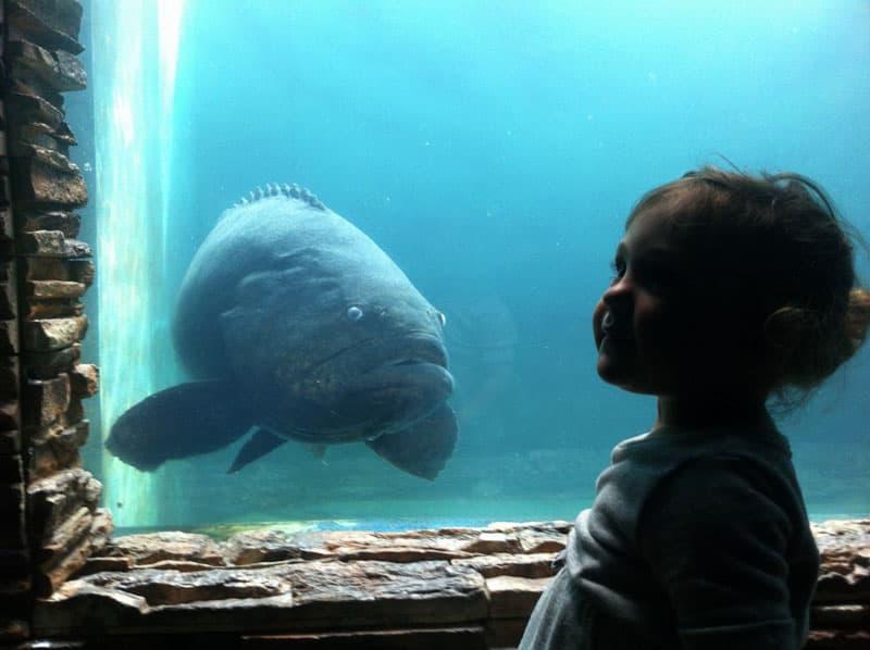 Aquarium Fish Lesson While Traveling