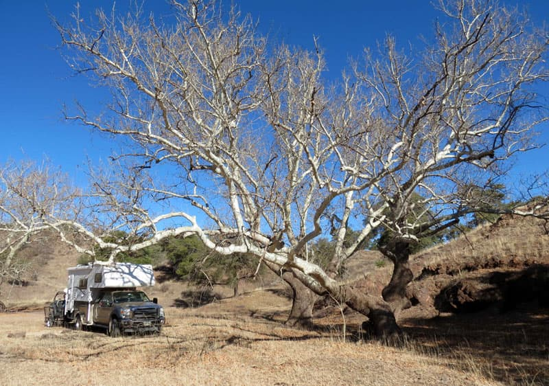 Camper With Sycamore Near Harshaw AZ