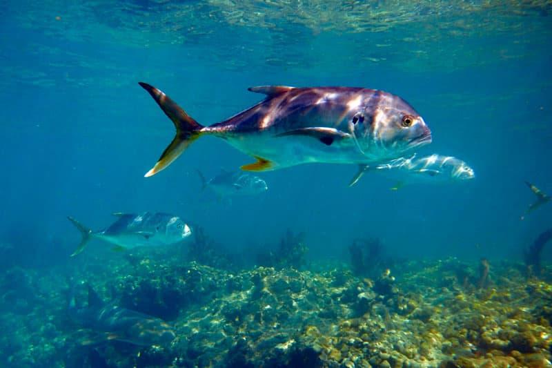 Scuba Diving Fish In Florida Keys