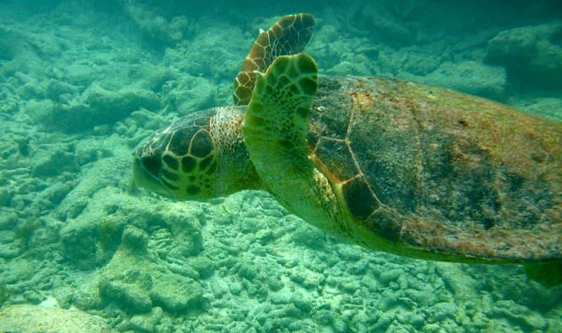 Turtles In Florida Keys