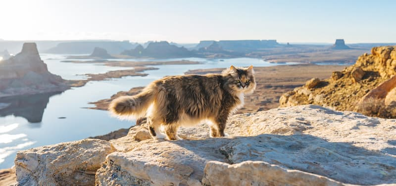 Luna Traveling Cat