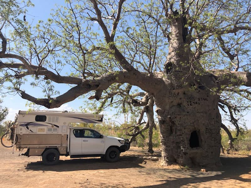 Northstar Camper Australia Tree