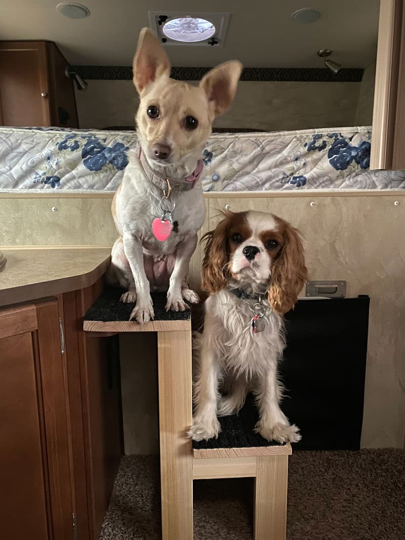 Pet Steps To The Cabover Dogs