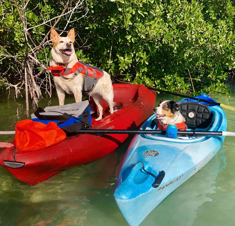 Pepper And Tabby On Gin Clear Water In Key West, Florida