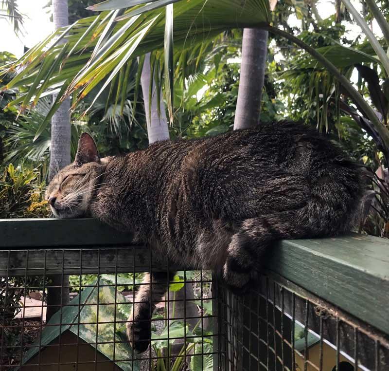 Cats At Hemingway House