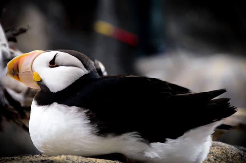 Puffin Sea Life Center