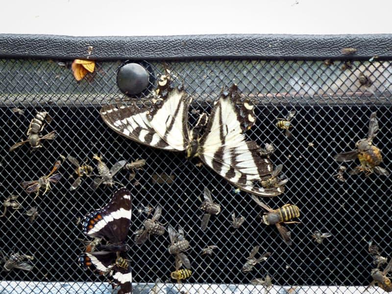 Bug screen on truck for Alaska drive